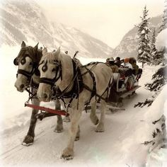 Horse pulling a sleigh...in the snow