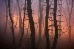 PHOTO BY :: Dorin Bofan Photography    http://dorinbofan.com/