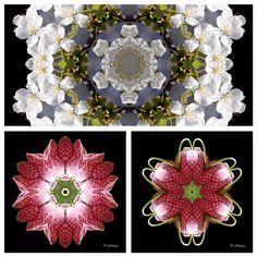 Mandalamix kreativesbypetra Petra, Mandala, Mandalas