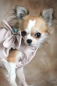Cute puppy ✿⊱╮
