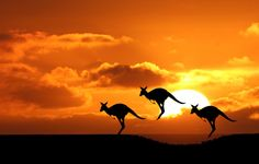 Do you want to travel to Australia? Know top 5 takeaways from my trip to Australia. My adventure guide will help you to enjoy traveling in Australia . Great Barrier Reef, S4 Wallpaper, Widescreen Wallpaper, Zebra Wallpaper, Horse Wallpaper, Amazing Wallpaper, Sunset Wallpaper, Computer Wallpaper, Wallpapers