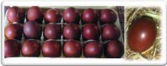 Dark Brown French Marans Eggs