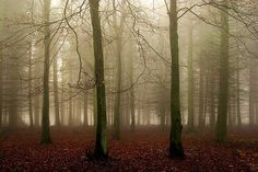 Winter Wood By Algo On Flickr.