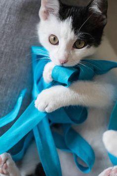 This cat makes me smile ♡