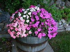 Whiskey barrels make great planters for vegetables and flowers alike - Paterson Gardening | Examiner.com