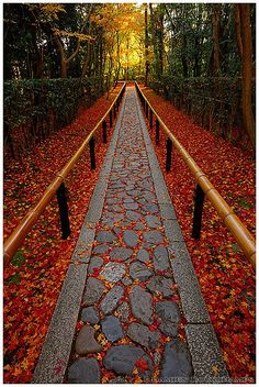 The end of Autumn - Entrance to Koto-in, a sub-temple of Daitoku-ji, Kyoto, Japan