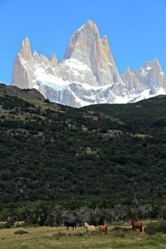 Planning atrip to Patagonia Patagonia Travel TIps Horses in front of Mount Fitz Roy www.compassandfork.com