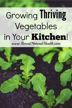 With winter right around the corner you may not be thinking about gardening, but you can actually grow thriving produce right in your kitchen with the limited space that you have.