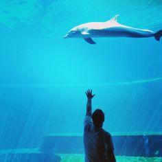 #dolphin #dreamer #water #acquariodigenova (w: Acquario Di Genova)
