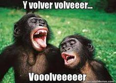 Resultado de imagen de imagenes de monos