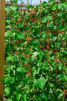 Pergola Patio, Herb Garden, Trellis, Gardening Tips, Outdoor Gardens, Garden Design, Plant Leaves, Crafts For Kids, Herbs