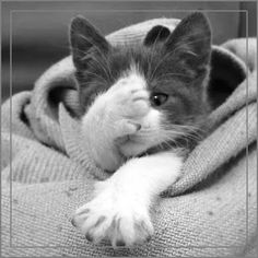 Funny cats pics humor kitty New Ideas Cute Kittens, Funny Cats, Funny Animals, Cute Animals, Funny Humor, Crazy Cat Lady, Crazy Cats, Beautiful Cats, Animals Beautiful
