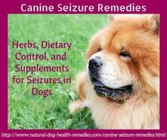 Canine Seizure Remedies