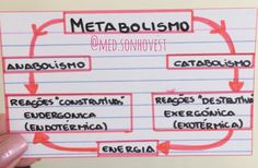 Anabolismo e Catabolismo. . . . #resumomedsonhovest #mapamental #resumos #biologia #naturais #metabolismo #catabolismo #anabolismo #enem #med #sonho Mental Map, Student Life, Mindfulness, Studying, School, Instagram Posts, Fitness, Medicine, Teaching Biology