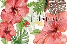 Watercolor red hibiscus tropical