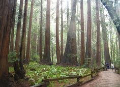Redwood National Park - USA