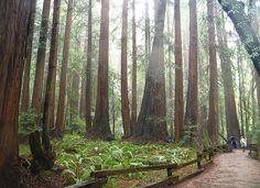 Redwood National Park - USA