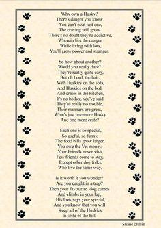 Siberian Husky_ so true I've had three now