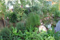 Australian native planting at the Melbourne International Garden Show 2014. Photo by Janna Schreier