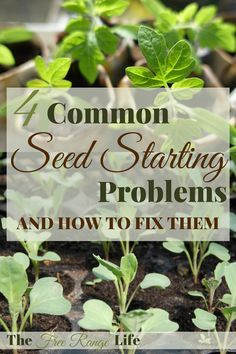 Common Garden Seed Starting Problems Fixes Homesteading  - The Homestead Survival .Com