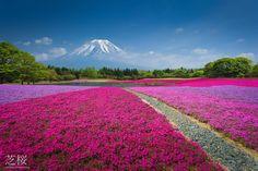 Mt. Fuji #japan