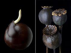 Edvard Koinberg: Fruits of Love