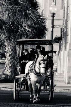 Wilmington, NC - Horse Drawn Carriage Tour on Market Street near the waterfront