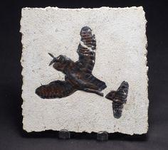 TINAMI - [モデル]P-47 化石