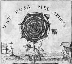 Rosa Mundi - Dat Rosa Mel Apibus - The Rose Gives Honey This explicitly Rosicrucian symbol was first used at the head of Joachim Frizius's Summum Bonum, then adopted for (Robert) Fludd's Clavis. Carl Jung, Tarot, A History Of Magic, Rose Croix, Templer, Science Photos, Photo Library, Compass Tattoo, Sacred Geometry