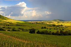 Béres Winery Dry White Wine, World Heritage Sites, Wine Country, The Guardian, Budapest, Wines, Countryside, Vineyard, Bottles