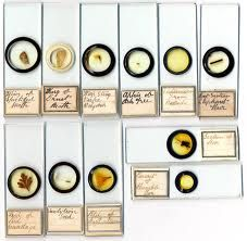 microscope slide - Google Search