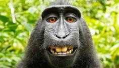 mono-selfie.jpg (654×377)