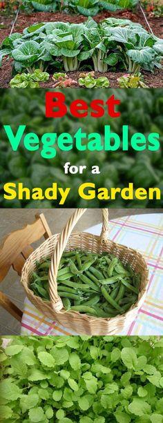 Best Vegetables for Shady Garden
