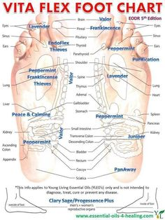 Young Living Essential Oils: Vita Flex Foot Chart