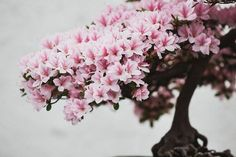 The magic of bonsai trees is captured beautifully by this talented photographer.
