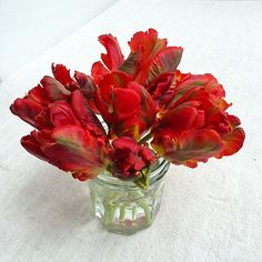 Parrot tulips in jam jar. Have a lovely Sunday! | by Of Spring and Summer