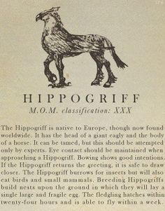 Hippogriff- Fantastic Beasts and Where to Find Them
