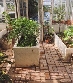 Farm Gardens, Small Gardens, Outdoor Gardens, Indoor Garden, Indoor Plants, Amazing Gardens, Beautiful Gardens, Greenhouse Plants, Small Space Gardening