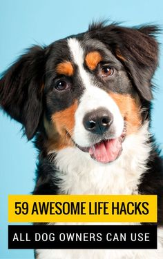 59 Simple Tips & Tricks All Dog Owners Should Know. Easy tips on dog grooming, training, health, exercise & safety.