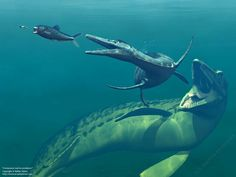 In the Cretaceous sea, an Enchodus chases an unidentified invertebrate, which is pursued by a Dolychorhynchops, which in turn is being hunted by the mosasaur, Tylosaurus.