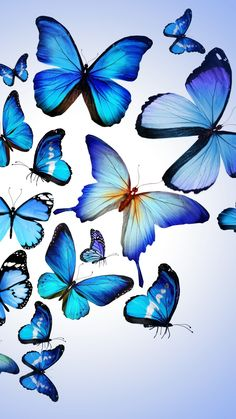 Butterfly Colorful Blue Drawing Art Beautiful iPhone 6 wallpaper