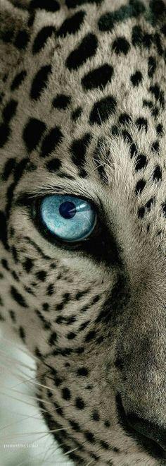 Feline eye Awesome af