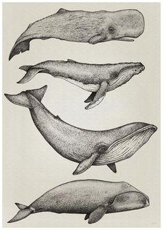 """Meine Tochter sagte: """"Guck mal, Mama. Ein Malfisch!"""" #Wale #Poster"""