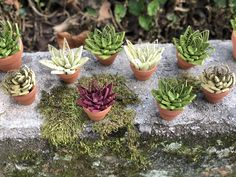Excited to share this item from my shop: Set of 3 Assorted Mini Quilled Paper Succulent Desk or Window Decoration Cactus Tall Succulents, Paper Succulents, Planting Succulents, Potted Flowers, Origami And Quilling, Paper Quilling Designs, Quilling Paper Craft, Flower Bookey, Cactus Flower