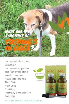 what is the best dry dog food for weight loss