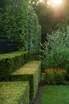 Doyle Herman Design Associates Landscape Design (note I'm no fan of boxes and balls topiary but this is graceful and private) C G Garden Pool, Shade Garden, Garden Landscaping, Formal Gardens, Outdoor Gardens, Landscape Architecture, Landscape Design, Formal Garden Design, The Secret Garden