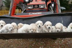 Here, take this bulldozer full of fluff because life sucks. | 18 Puppy Pictures For Anyone Who Is Having A Freakin' Bad Day