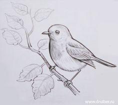 A white birch and a sparrow Landscape Pencil Drawings, Pencil Sketch Drawing, Bird Sketch, Pencil Art Drawings, Art Drawings Sketches, Bird Drawings, Easy Drawings, Animal Drawings, Sketch Art