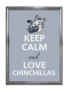 Keep calm and love chinchillas