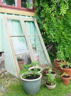 Easy Greenhouse idea